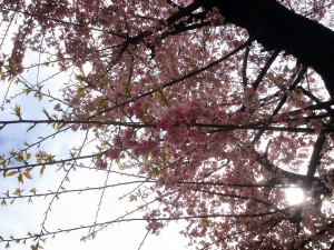 桜©摂理hiroko
