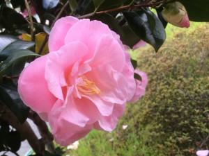花ピンク©摂理hiroko