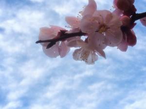 春5@摂理hiroko