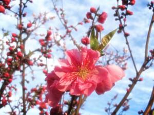 春4@摂理hiroko