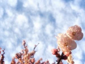 春3@摂理hiroko