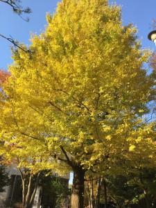 公園の木々 - 摂理女性のハッピーブログ